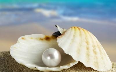 perla_ostrica