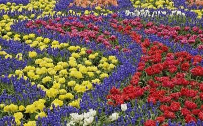campo-di-fiori_NG1