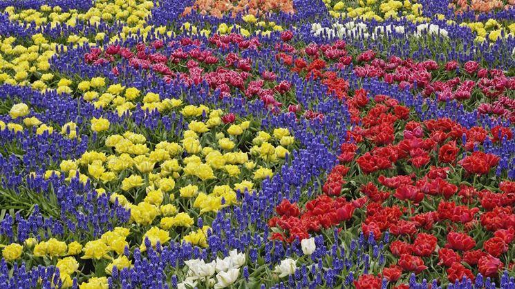 Primavera: il risveglio