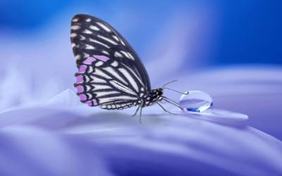 brucofarfalla-2